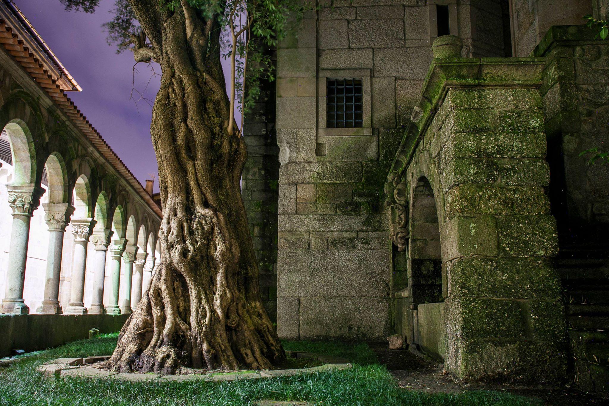 Jardim do claustro ao anoitecer, com oliveira em primeiro plano